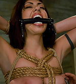 Stripped, dildoed, roped and trained to suck and fuck